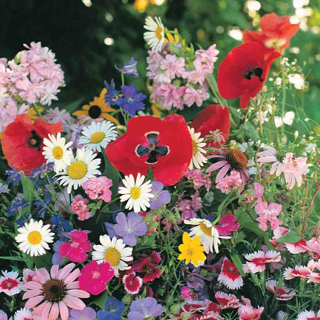 Wildflower Seeds, Value Shade Mix Pack